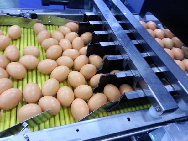 蛋品输送系统